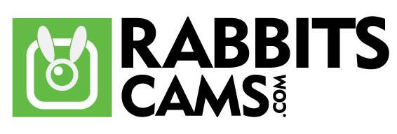 rabbitscams recensione opinioni truffa